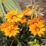 Sezonski posao vrtlara – smestaj – radno isksutvo pozeljno – sadnja i drugi poslovi