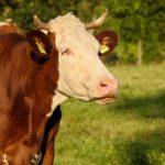 POSAO NA FARMI U INOSTRANSTVU – Potrebno vise radnika
