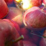 POSAO u NEMAČKOJ 2018 za rad u hladnjači voća i povrća – mogu muškarci i žene