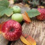 POSAO radnici za berbu voća i povrća u NEMAČKOJ – plata od 1100 do 2300 evra