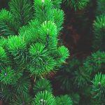 Posao u Austriji – Rad u šumi – Fizički poslovi