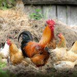 POSAO NA FARMI – Briga o zivotinjama – mesta su ogranicena