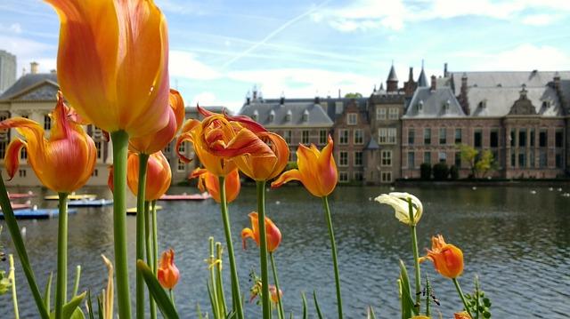 Holandija inostranstvu poslovi u Potražite posao
